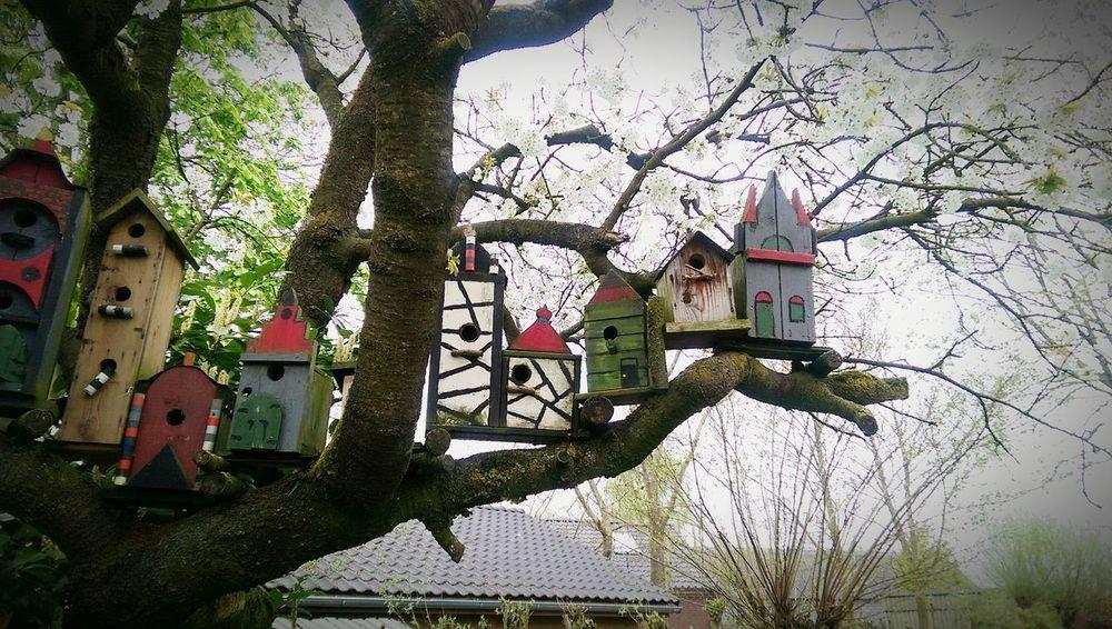 Birdhouses Birds Nest ArtWork Colorful