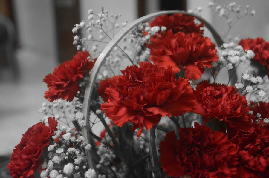 When actions fail flowers speak ☺🌻🌼🌸🌹 Red Flower Freshness Petal Beauty In Nature Lovetotakepics Capturingeverymoment Nikon Photography NikonD5100 From My Point Of View Nikon Capture The Moment Bouquet Of Flowers Close-up Vibrant Color Selective Focus Selective Color