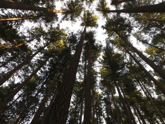 Trees. Tree