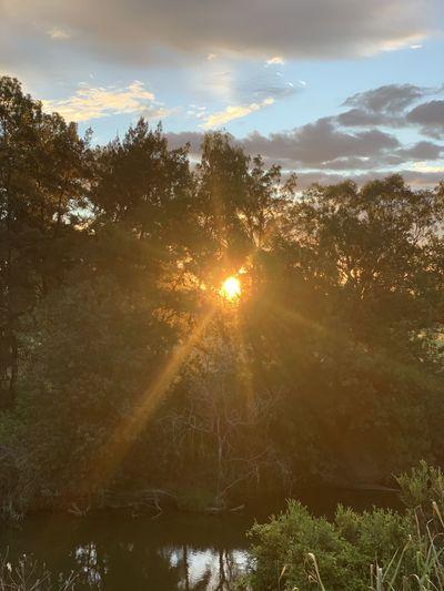 Sunlight streaming through trees against sky during sunset