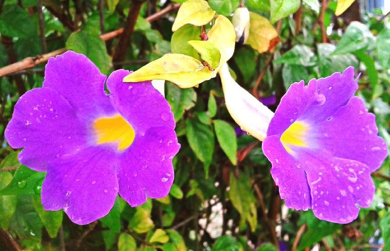Coisa De Deus Natureza Perfeita♡♥ Flores Flores Rojas