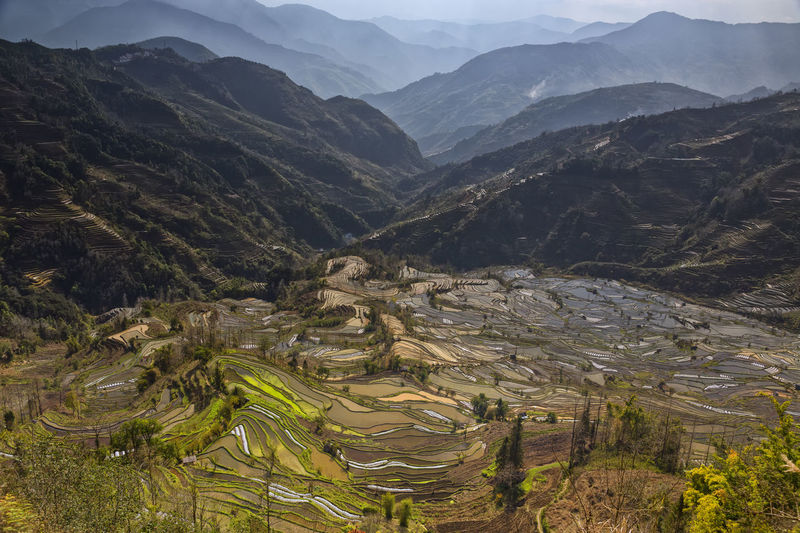 High angle view of rice paddy against mountains