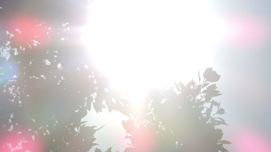 Close-up Day Illuminated Leafs Leafs Photography Leafs 🍃 Lens Flare Nature Outdoors Silhouette Sun Beams Sun Behind Leafs Sun Behind The Tree Sun Light Sun ☀