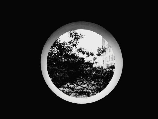 Circle Frame Tree