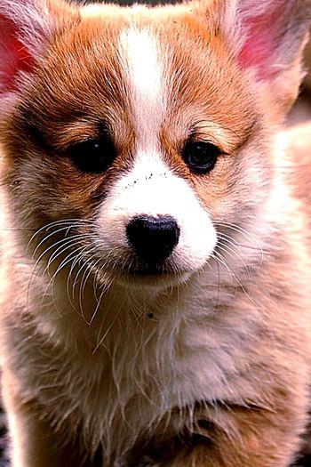 Pets Corner Beautiful Dog. Open Edit. Taking Photos Colour Portrait Beautiful Animal Portrait.