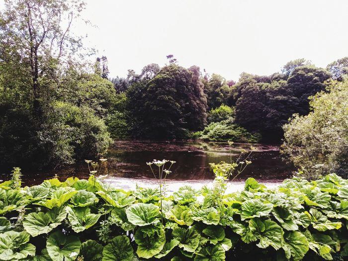 Duck pond 🦆