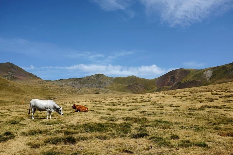 Nature beauty Pyrenees Paysage Landscape_lovers Livestock Arid Landscape Arid Climate