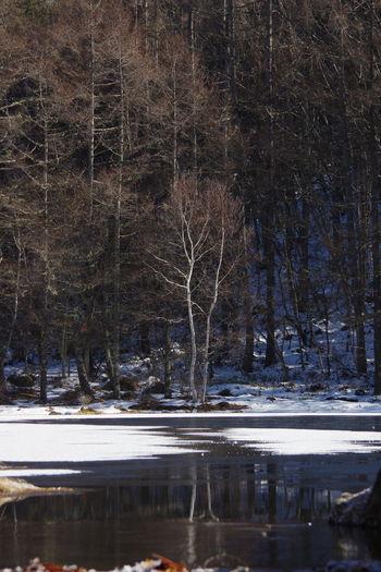 御射鹿池 冬景色 冬 長野県