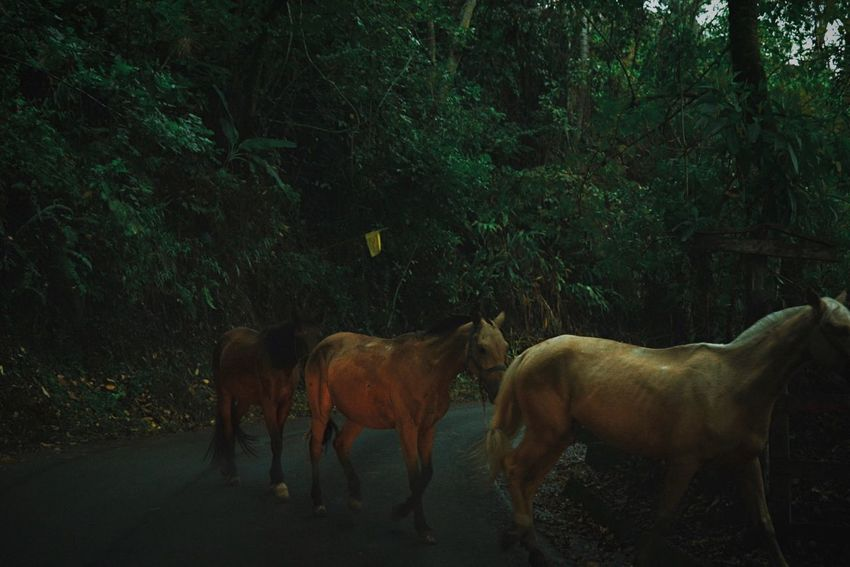 Instincts. Roadtrip Open Edit Colombia Traveling On The Road The EyeEm Facebook Cover Challenge EyeEm Best Shots Horse