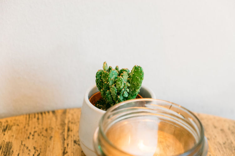 Cactus Close-up Copy Space Freshness Glass Indoors  Jar No People Still Life Succulent Plant Table Transparent