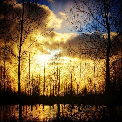 #Sunset on the flooded #Maraispoitevin 2/6 Sunset Maraispoitevin