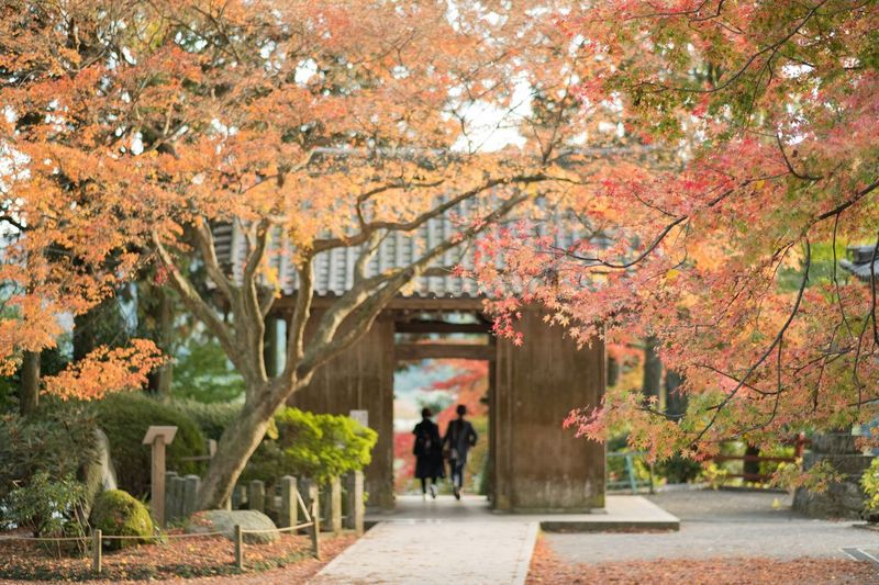 Eye Em Nature Lover Autumn Japanese Garden My Favorite Place Japan Autumn Beauty In Nature