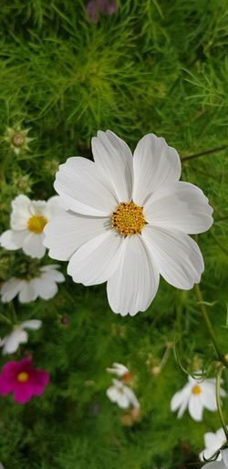 Walking Around Garden Flowers Flowers_collection White Flower Eyem Flowers Flower Head Flower Summer Petal Uncultivated Close-up Plant