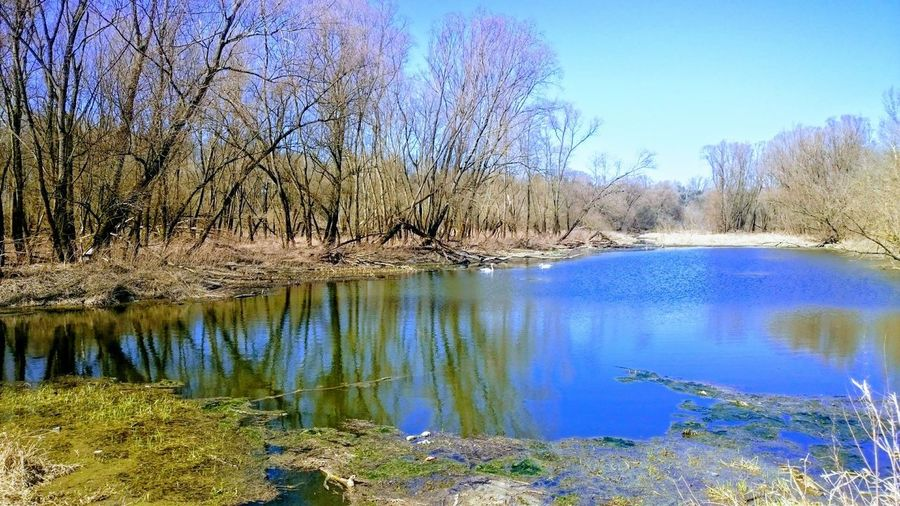 Early Spring Spring Sunnyday Water Tree Lake Reflection Sky Standing Water Calm Tranquil Scene Countryside Tranquility