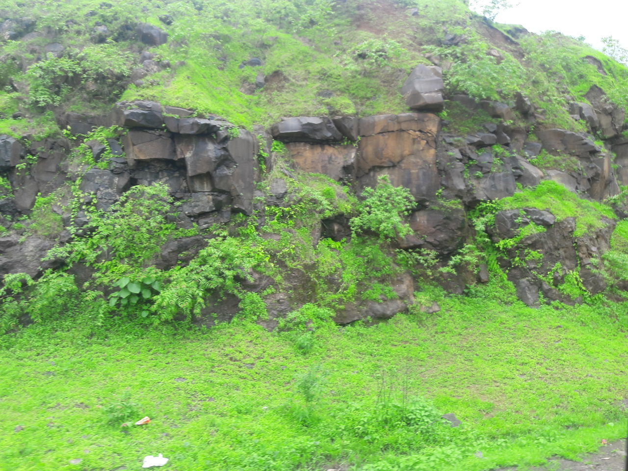 green color, no people, growth, rock - object, nature, outdoors, plant, day, tree, beauty in nature