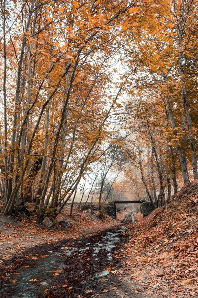 Fall Fall Beauty Fall Colors Iran Nature Iran