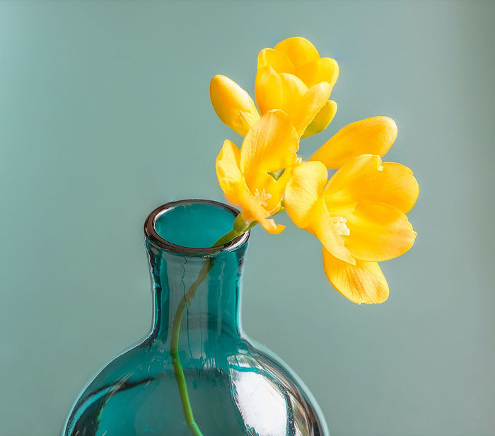 Beauty In Nature Bottle Close-up Day Flower Flower Head Fragility Freshness Frisia Indoors  Liquid Nature No People Studio Shot Teal Vase Water Yellow