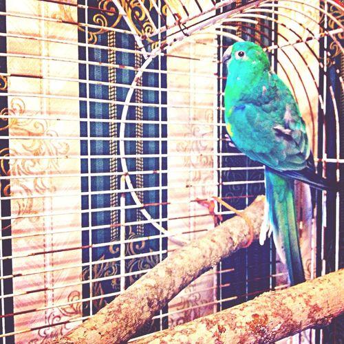 Birdy Dalton Dally