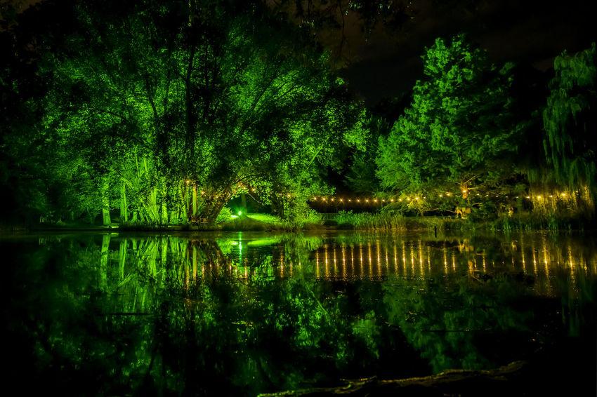 Blaue Nacht Green Green Green Green!  Regensburg Illumination Lake Nature Night No People Reflection Stadtpark Standing Water Tranquil Scene Tranquility Water Waterfront