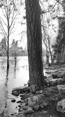 The KIOMI Collection Black And White Photography Spokane River Spokane Washington Black And White Collection  Black And White