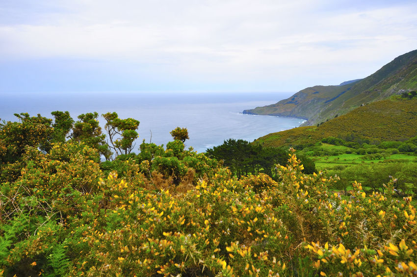 coast of death in galicia spain SPAIN Coast Of Death Galicia Spain Beauty In Nature Coast Of Death In Galicia Spain Day Flower Growth Horizon Over Water Landscape Mountain Nature No People Outdoors Plant Scenery Scenics Sea Sky Tranquil Scene Tranquility Vegetation Water