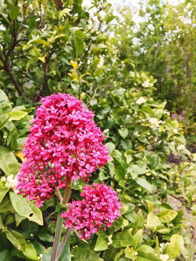 Flores De Primavera en Tafira gran canaria.