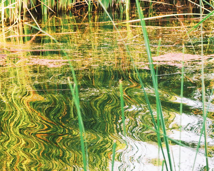 Backgrounds No People Outdoors Day Nature Growth Grass Beauty In Nature Scenics Water Lake Reflection Green Color