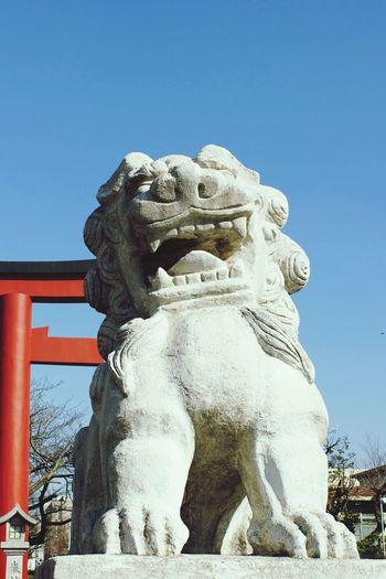 Guardian Lion-dog At Shinto Shrine Enjoy Life Snapshot