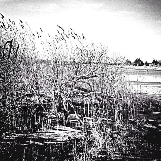 #BW Society EyeEm Nature Lover Landscape_Collection