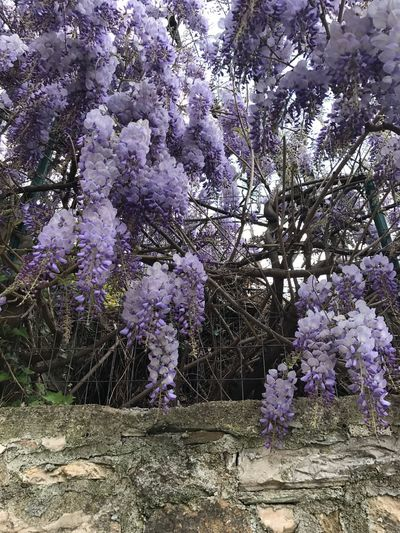 Flower Tree Blossom Springtime Fragility Growth Nature Branch Beauty In Nature Freshness No People Day Outdoors Close-up