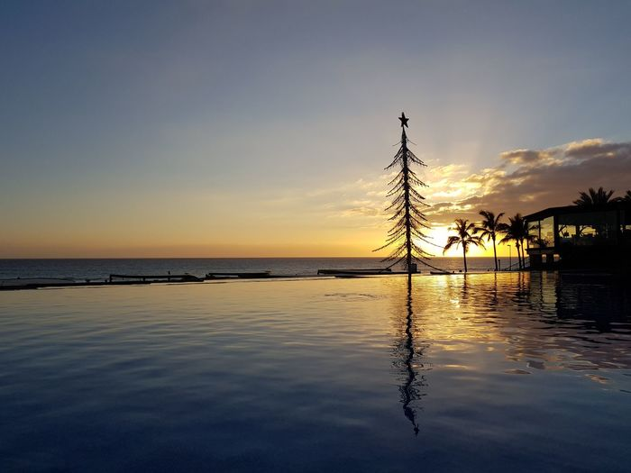 Tropical Christmas Infinity Pool Mobile Photography Samsung Galaxy S8+ Mobilephotography No Edit/no Filter EyeEmNewHere Tree EyeEm Gallery christmas tree Sunset Sunset Silhouettes Samsungphotography Water Sea Sunset Beach Silhouette Sky Horizon Over Water Tranquil Scene Calm Coast Tranquility Standing Water Idyllic