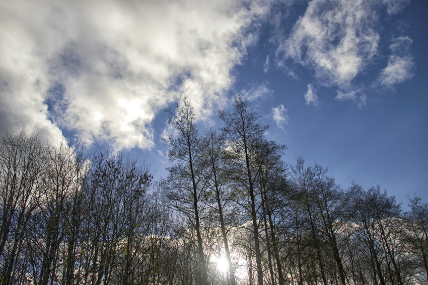 Tree Sky Plant Cloud - Sky Low Angle View Beauty In Nature No People Tranquility Nature Scenics - Nature Growth Day Forest Tranquil Scene Outdoors Sunlight Land Non-urban Scene WoodLand Tree Canopy