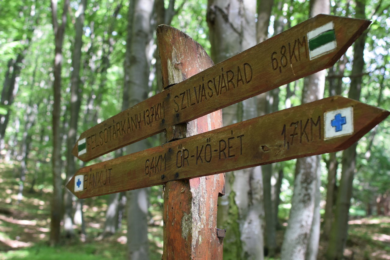 Close-Up Of Information Sign Against Trees In Forest