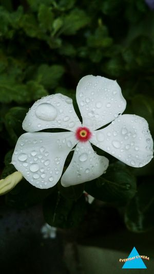 Today Beautiful Morning Eyem Best Shots Nature_collection Flower Photography EyeEm Nature Lover EyeEm Best Edits
