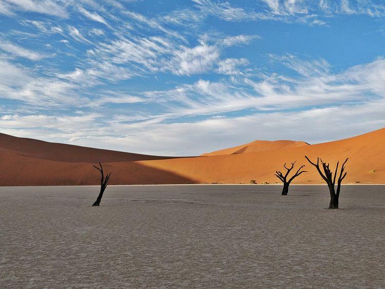 Trees Deadtrees Deadvlei Dunes Namibia Desert Namibia Landscape Namib Desert EyeEm Selects Sand Dune Desert Arid Climate Mountain Bird Full Length Horizon Sand Drought Tree