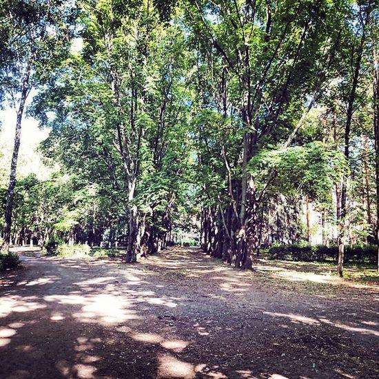Vrn Voronezh Forest