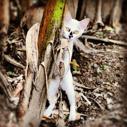 Find A Little Ghost in my backyard asia demon kitty yellow eyes instamood instagrammer instasia picoftheday photoftheday igers igerstaiwan 台北 台灣 貓咪
