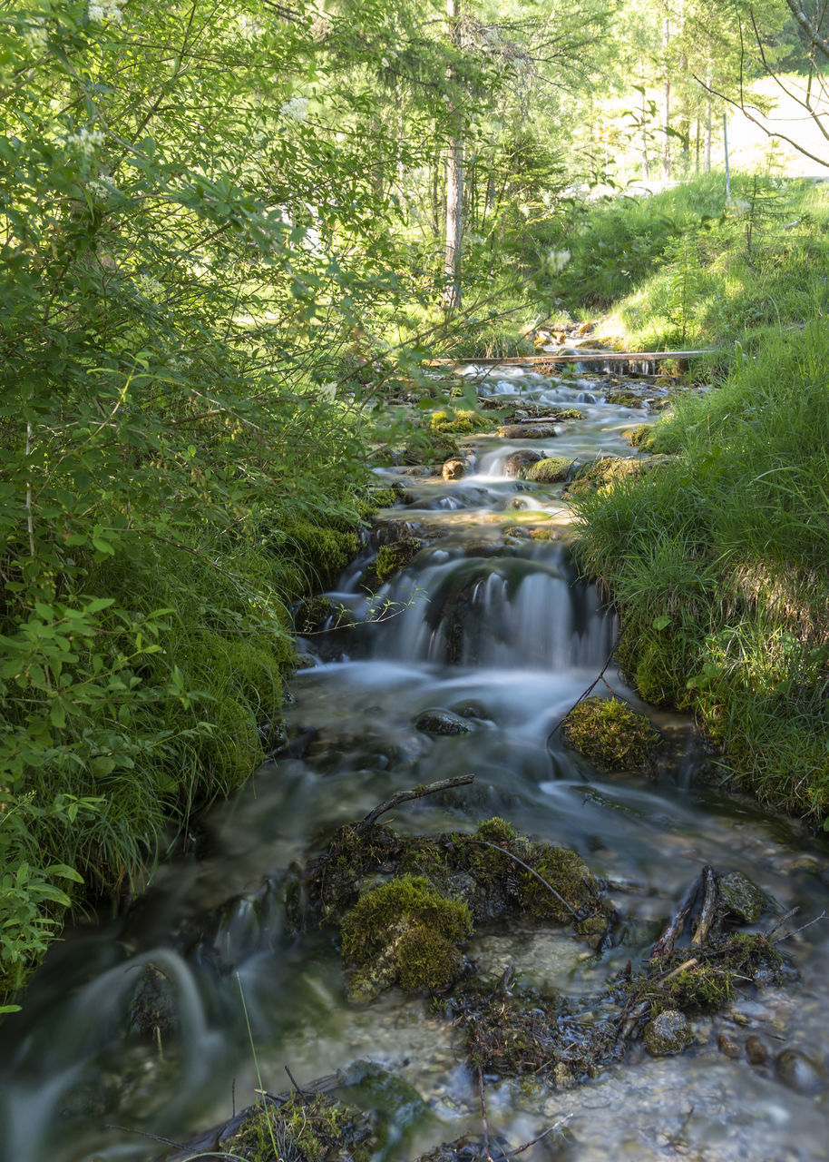 plant, tree, forest, water, growth, beauty in nature, nature, scenics - nature, green color, motion, land, no people, long exposure, flowing water, blurred motion, day, tranquility, flowing, rock, outdoors, stream - flowing water, rainforest, falling water