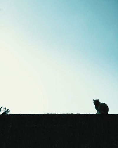 Cats 🐱 Cat Photography Catsagram Cats Of EyeEm Strays Silhouette Silouette & Sky Taiwan Houtong