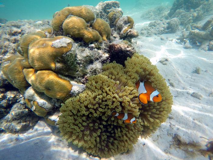 Sea Animals In The Wild UnderSea Animal Wildlife Sea Life Underwater Water Animal Themes Coral Invertebrate Animal Marine Nature No People Fish Vertebrate Group Of Animals Close-up Beauty In Nature Ecosystem
