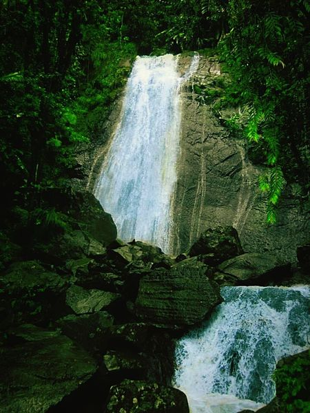 "At ""El Yunque"" Puerto Rico. Natures Colors Natureporn Nature_collection Forest Photography Hidden Gem Green Green Green!  Capture The Moment Check This Out Silence Of Nature Tropical Dream Tropical Climate Tropical Paradise Puerto Rico Water Waterfall Waterfall_collection Tourist Attraction  Nature Photography From My Point Of View"