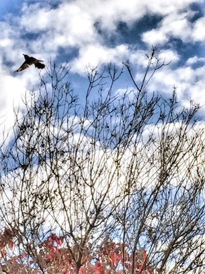 Check This Out Relaxing Taking Photos Lookingup Showcase April Autumn Sky Bird Mobilephotography Eye4photography  Nature IPS2016Nature Freedom