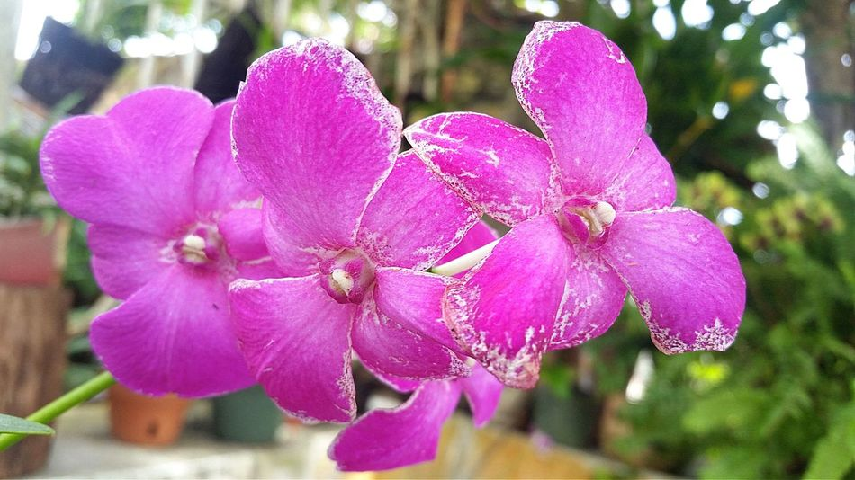 Flower Pink Color Nature Beauty In Nature Fragility Focus On Foreground Day No People Close-up Flower Head