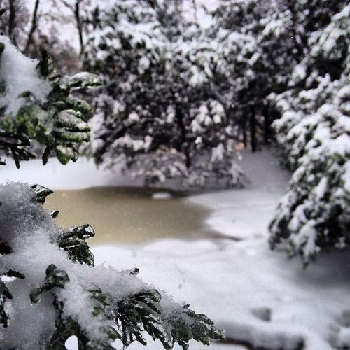 Frozen pond Ice Frozen Winter Sniw snow wow strom