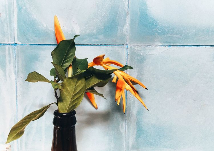 Close-up of orange tropical plant against blue wall