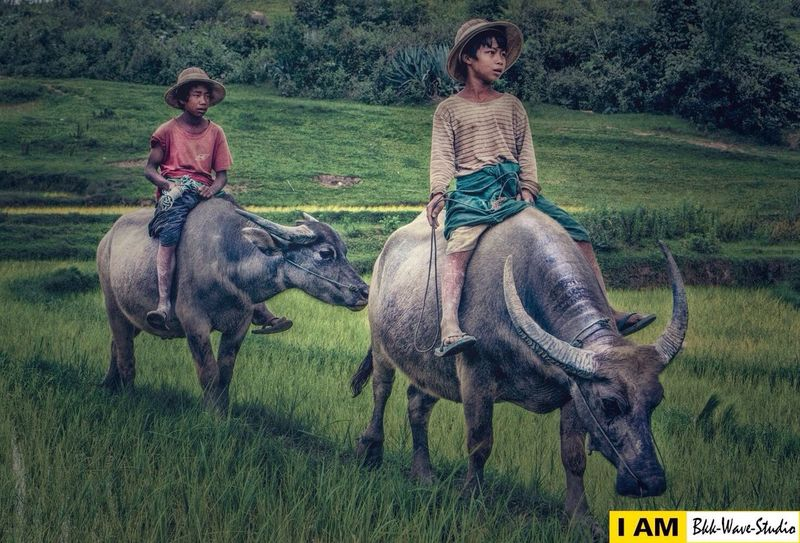 We are buffalo boy... Enjoying Life Landscape Photography Travel Photography Bkkwavestudio Check This Out Hello World Potrait_photography Live For The Story