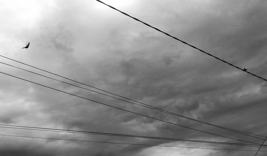 Flying Electricity  Bird Cable No People Cloud - Sky Storm Cloud Animal Wildlife Fog Day Animal Themes Animals In The Wild Birds Of EyeEm  Birds Black And White Overcast One Animal Power Line  Outdoors Vapor Trail Power Supply Storm Insect