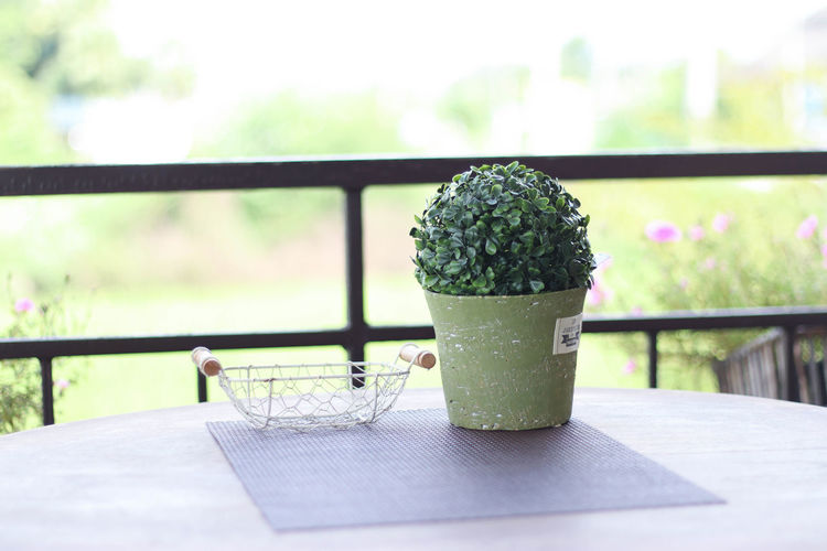 Close-up Day Focus On Foreground Food And Drink Freshness Green Color Growth Indoors  Nature No People Plant Table