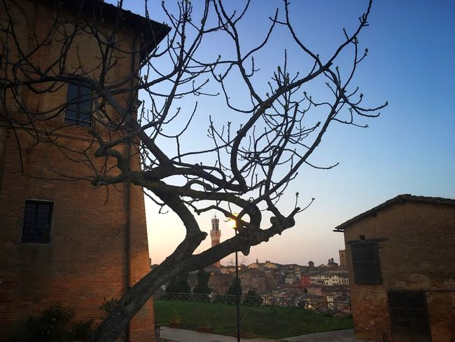 Tree Sky Nature Italia Toscana Tuscany Italy Siena Streetphotography Travel Nature Photography Urban Landscape Naturelovers Skyline Clear Sky Silhouette Light And Shadow Sunset Nature Architecture No People Travel Destinations Nature_collection Traveling IPhoneography