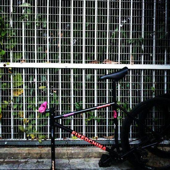 Cadence Cinelli Mash Fixie fixedgear trispoke trackbike yhc